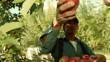 Nuevos salarios para cosecha y empaque de fruta en Río Negro y Neuquén