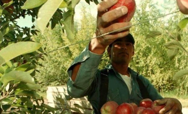 Cosecha y empaque de frutas en las provincias de Rio Negro y Neuquén.