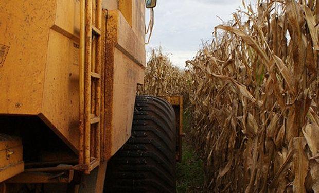 Ucrania y Rusia: récord de exportaciones de maíz en 2013