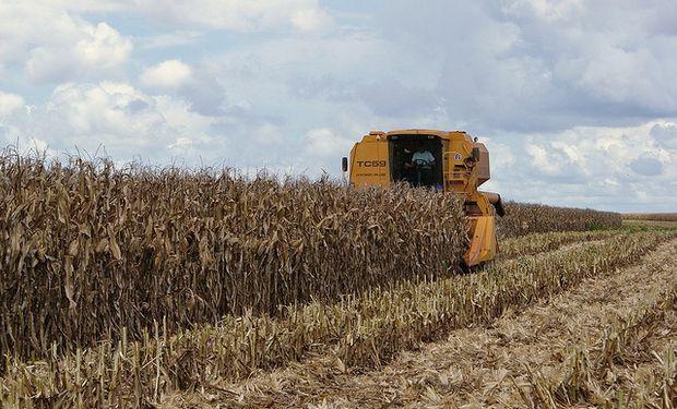 China podría ser el destino de los excedentes de maíz argentino