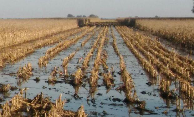 El lote donde se cosechó el maíz.