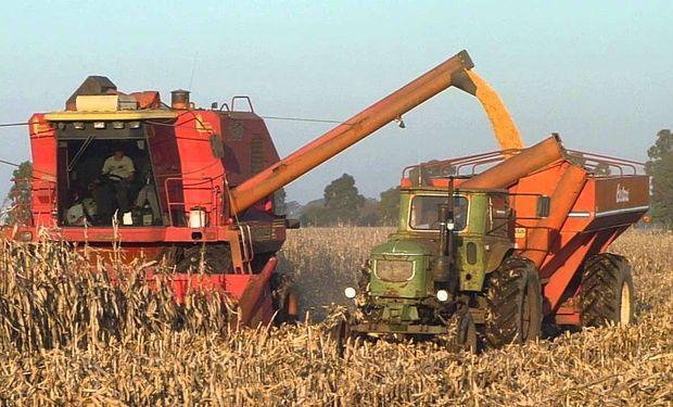 La semana pasada finalizó la cosecha argentina de maíz comercial con una producción de 28 millones de toneladas.