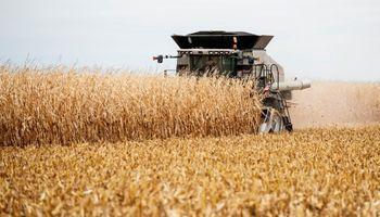 Estados Unidos: puso primera la cosecha récord de maíz