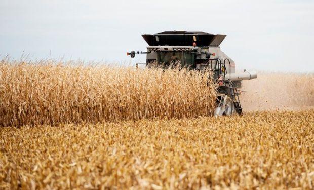 Se esperan 383,4 millones de toneladas de maíz en Estados Unidos.