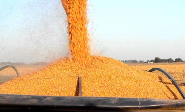 Pocos avances: durante la semana pasada la cosecha estuvo prácticamente paralizada y hasta el momento se levantó sólo el 36%.