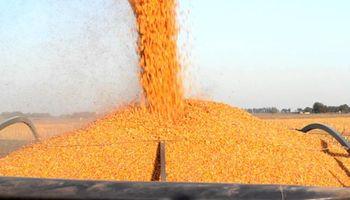 Santa Fe: complicaciones para finalizar la cosecha de maíz