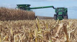 Se acerca un nuevo informe que podría impactar sobre el mercado de granos