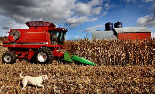 Prevén una mayor cosecha global de maíz.