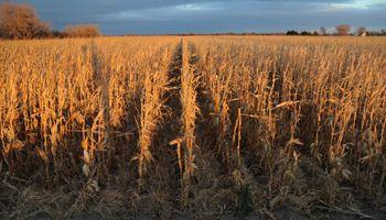 Más demoras para la cosecha en Argentina
