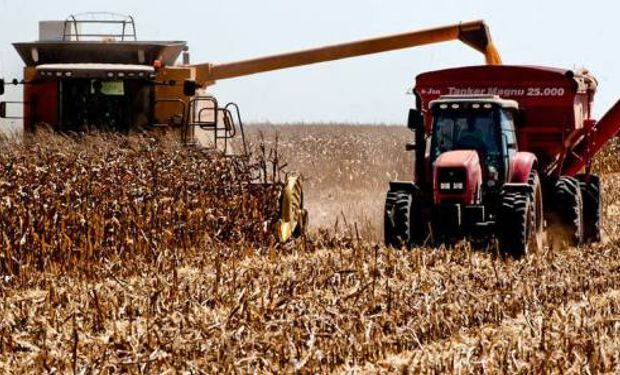 Comenzó la cosecha de la safrinha de maíz en Brasil: cuál es la expectativa