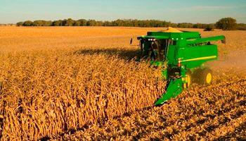 Menos maíz en Brasil