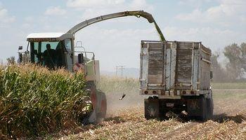 Comenzó la cosecha de maíz