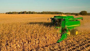 Mejora del margen: prevén una mayor producción de maíz y trigo
