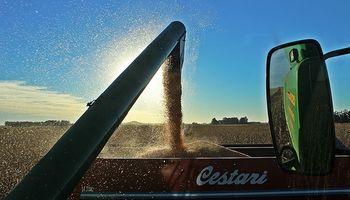 El maíz de primera supera las medias históricas en Santa Fe