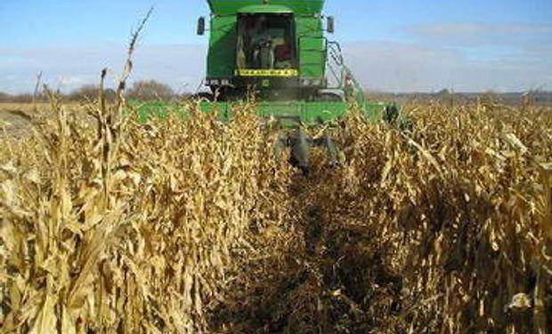Sudáfrica rumbo a una gran cosecha de maíz