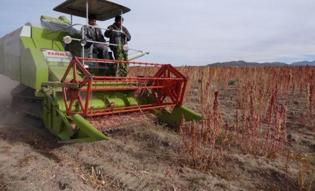 """En 2016 """"va a bajar sustancialmente la producción de quinua"""", dijo ayer el ministro boliviano de Desarrollo Rural y Tierras, César Cocarico."""