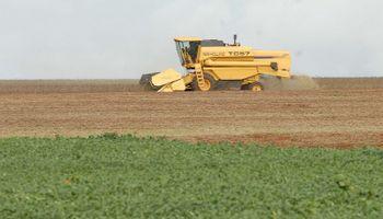 Otro récord para la cosecha de soja