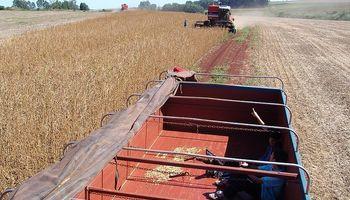 Complicaciones logísticas en la cosecha