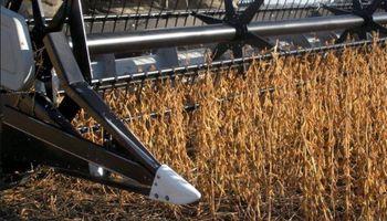 Fin para la cosecha de soja: ¿cuál fue el rinde promedio?