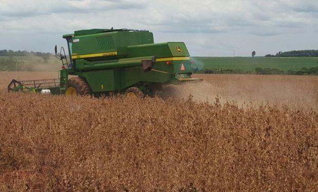 Brasil. La cosecha arrancó con fuerza en el mayor estado productor.