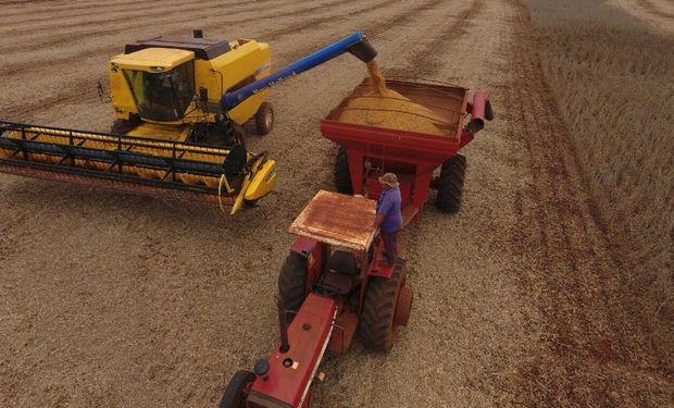 Brasil: labores de cosecha lograron cubrir un 19% de la superficie.