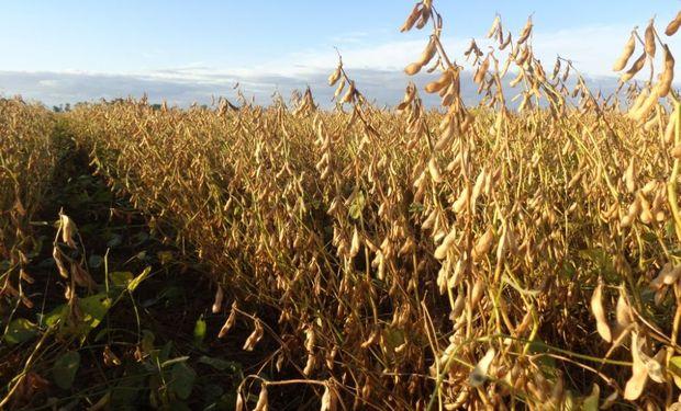 La cosecha de soja cierra en tiempo récord: cómo termina el rinde de las 15 zonas productoras
