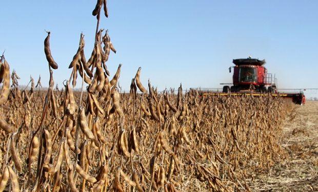 Subas en Chicago: el uso industrial de la soja en Estados Unidos alcanzó un máximo histórico