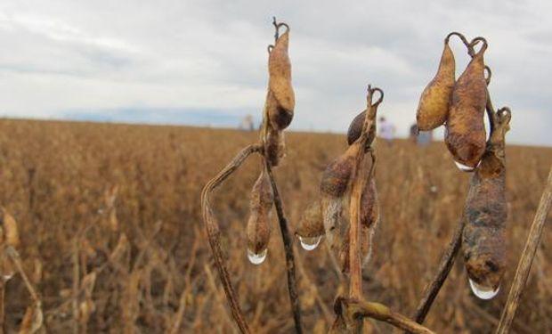 Lluvias vuelven a retrasar la cosecha de soja
