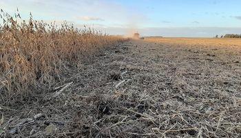 """El precio de la soja salva a la peor cosecha en 10 años: """"Muchas empresas hubiesen terminado en quebranto"""""""
