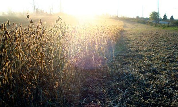 La Bolsa de Cereales de Buenos Aires dio inicio a las labores de cosecha.