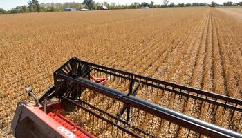 En el amanecer de la cosecha, la soja presenta sus desafios