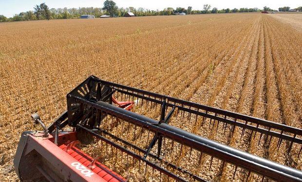 A pesar de la cosecha récord, por la baja del precio de la soja y los altos costos de producción, la rentabilidad del cultivo no es la deseada.