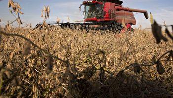 Preocupación en el sector ante la próxima cosecha de soja