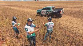 Hay más soja de la que se esperaba en Brasil: qué rinde estiman ahora