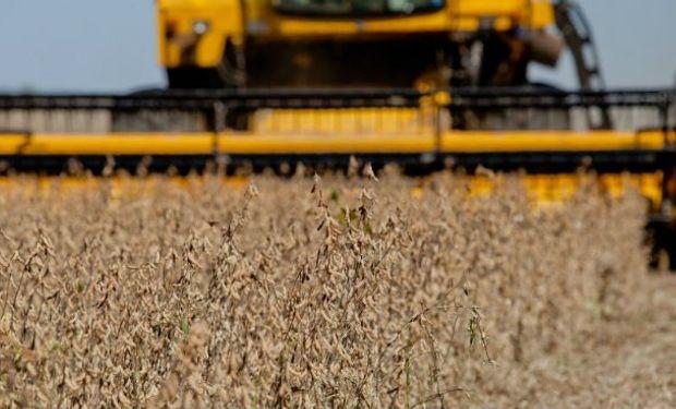 Informe del USDA: qué espera el mercado para la cosecha en Sudamérica