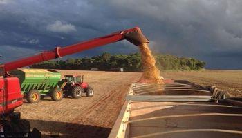 Recta final para la cosecha de soja en Mato Grosso
