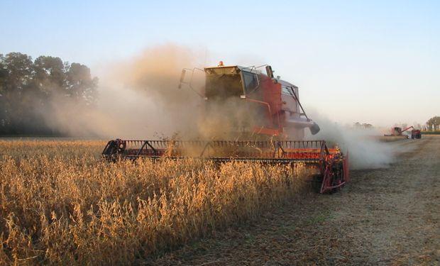 Avances en las cosechas de soja y sorgo