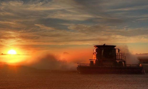 Faltan pocas semanas para comenzar la cosecha en Estados Unidos.