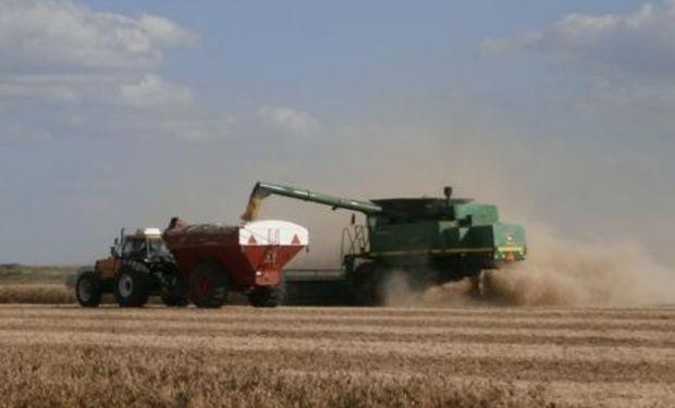 Lote de soja de segunda sobre rastrojo de trigo, en pleno proceso de cosecha, en el centro del departamento Las Colonias.-