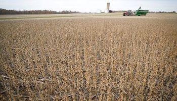 Soja: destacan rindes por encima de lo esperado en la recta final de la cosecha