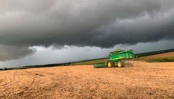 En Brasil las lluvias retrasan la cosecha pero consolidan la expectativa de una campaña récord