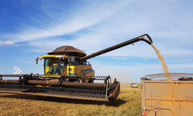 Soja: se espera que la cosecha gane ritmo en las próximas semanas.