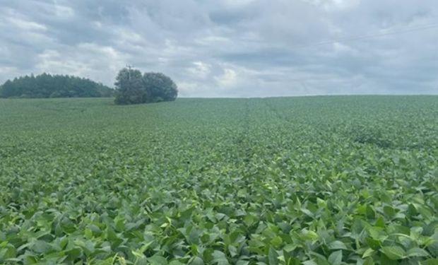 Menor ritmo en 10 años: se atrasa la cosecha de soja en Brasil y temen por el impacto en la calidad