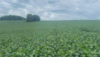 Brasil: cae la proyección de exportación de soja de abril, pero igual será récord