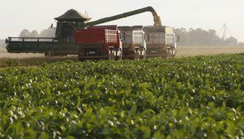 Soja en Brasil: nueva reducción en la estimación de cosecha