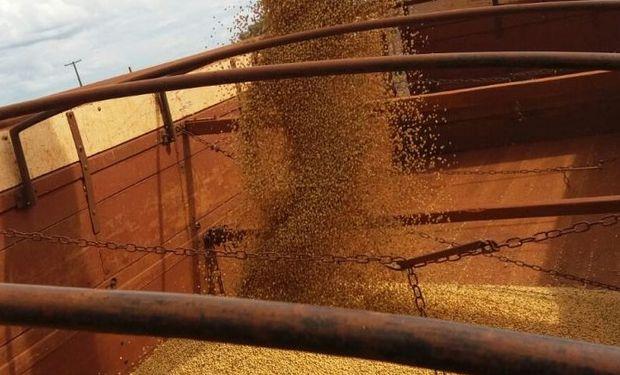 Brasil: rápido avance de la cosecha.