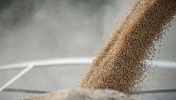 Cosecha de soja en Estados Unidos podría llegar a ser récord