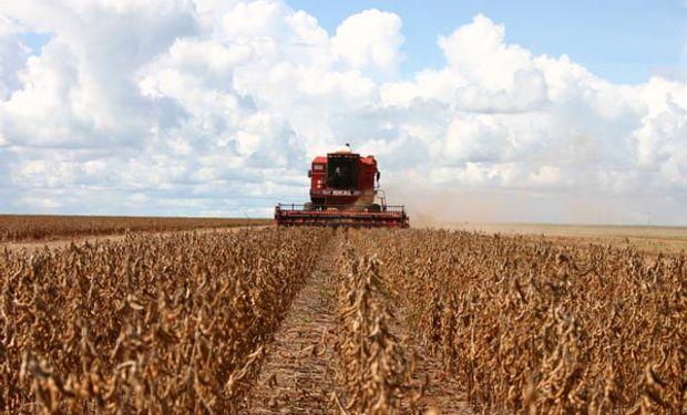 A pesar de proyectarse 58 millones de toneladas de soja, la retracción de los precios internacionales impactan negativamente en el ingreso de divisas.