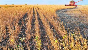 """Escenario """"entreverado"""" en plena cosecha de soja en Uruguay"""