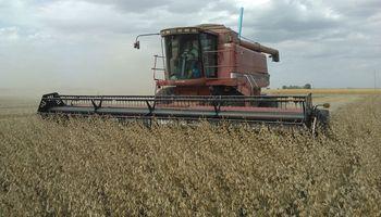 Se deben cosechar 18,7 quintales de soja  para cubrir los costos en Entre Ríos